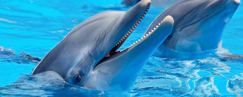 Sailing Community Shuns Dolphin Show
